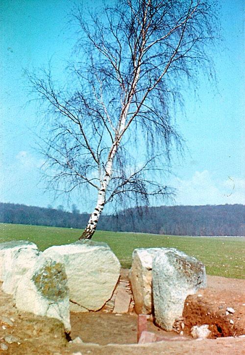 Bild 7. Lancken-Granitz. Birkengrab 2009