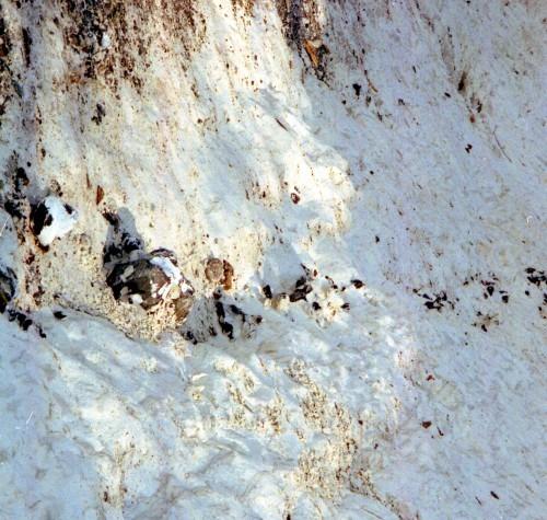 """Kreideabsturz mit deutlichen Feuersteinbändern. Man nutzte nur den """"bergfrischen"""" Feuerstein 1993"""