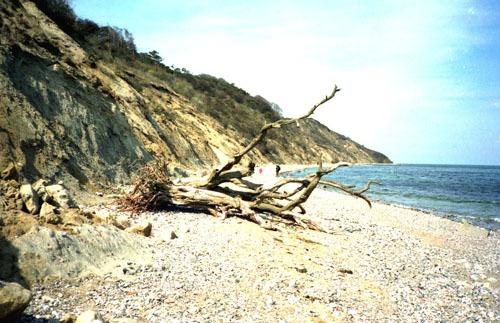 Bild 2. Hiddensee. Steilufer am Dornbusch. 1993