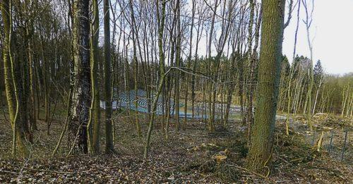 Abb. 11.  Bergen-Rugard. Freilichtbühne, einst als Thingstätte missbraucht. Abholzung Ostern 2015.