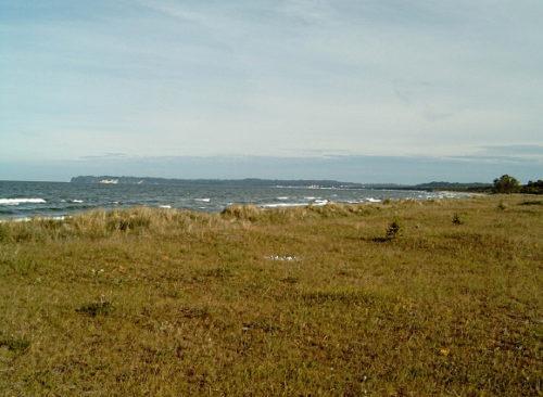 Abb 6 Prora. Unter Naturschutz stehende Stranddistel.OR Aufnahme - A. Leube im Juli 2005