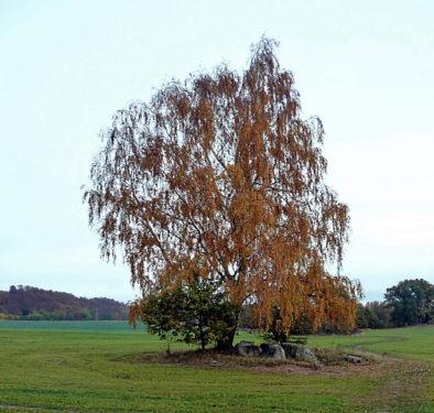 Abb. 3 Lancken-Granitz. Sogenanntes Birkengrab. 2009. Aufnahme A. Leube
